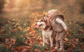 Картинка осень, собака, девочка, друзья, хаски, опавшие листья, Марта Козел