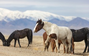 Картинка горы, кони, лошади