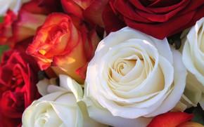 Картинка цветы, розы, букет, белая