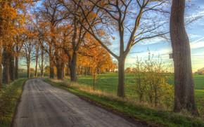 Картинка дорога, поле, осень, утро