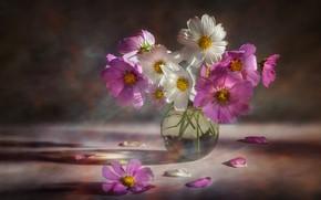 Картинка цветы, букет, розовые, белые, вазочка, космея, космеи