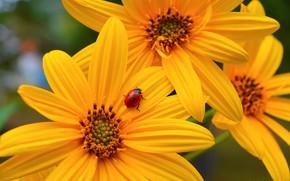 Картинка Flowers, Yellow flowers, Жёлтые цветочки