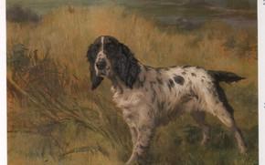 Картинка трава, собака, колосья, EARL