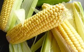 Картинка крупный план, кукуруза, злаки, початки