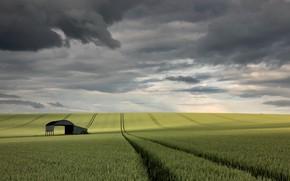 Картинка поле, небо, колосья