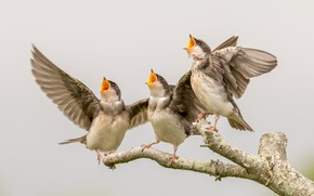 Картинка птицы, природа, компания
