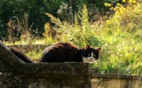 Картинка зелень, кошка, лето, трава, кот, взгляд, морда, свет, природа, поза, блики, парк, черно-белый, черный, лежит, …