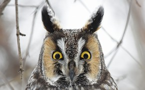 Картинка глаза, сова, птица