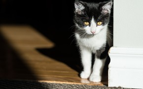 Картинка капля, тень, котёнок, котейка