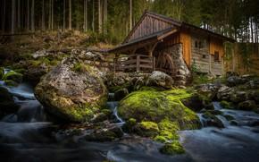 Обои лес, вода, дом, река, мельница