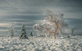 Картинка зима, трава, снег, деревья, пейзаж, природа