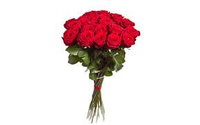 Картинка розы, букет, белый фон