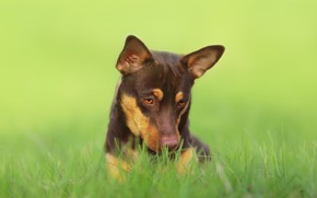 Картинка взгляд, друг, собачка, травка
