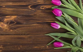 Картинка цветы, colorful, тюльпаны, wood, flowers, tulips, spring, purple
