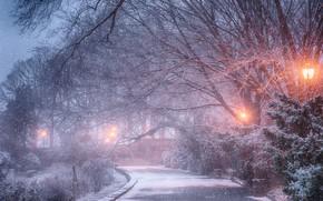 Картинка зима, снег, деревья, парк, фонари, дорожка, Yury Lugansky