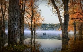 Картинка осень, лес, деревья, пейзаж, природа, туман, озеро