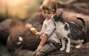 Обои кошка, кот, яблоко, мальчик, дружба, друзья, боке