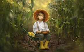 Картинка природа, заросли, мальчик, кукуруза, тачка, ребёнок, Jansone Dace