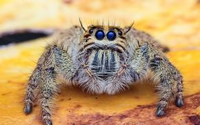 Картинка животные, насекомые, Макро, паук