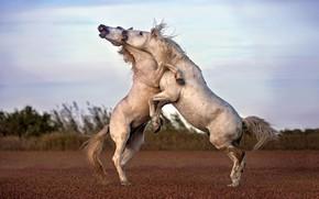 Картинка игра, лошади, парнокопытное