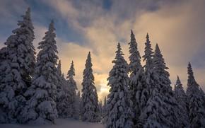 Картинка зима, снег, деревья, природа, ели, Башкортостан, Иремель, природный парк, Межин Сергей
