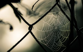 Картинка photography, nature, macro, fence, Spider web