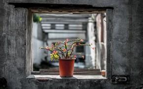 Картинка кактус, окно, горшок, натурализм