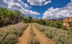 Картинка дорога, Аризона, США, Prescott Valley