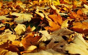 Картинка осень, свет, поляна, желтые, листопад, кленовые, боке, осенние листья