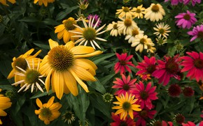 Картинка цветы, сад, flowers
