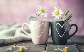 Картинка цветы, ромашки, кружки