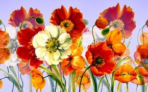 Картинка Maki, Grafika, Kwiaty, Kolorowe