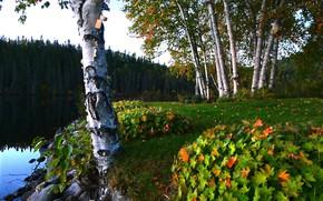Картинка камни, природа, деревья, берег, леса, листья, ели, озеро, лето, берёзы, пейзаж