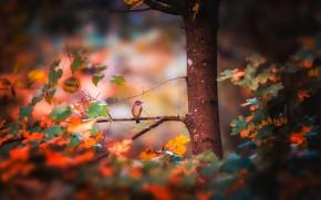 Картинка осень, лес, птица