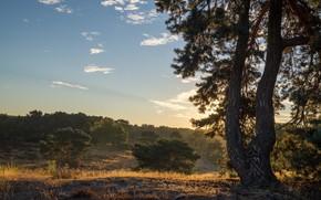 Картинка небо, облака, дерево, сосна, кустарники