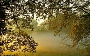 Картинка туман, утро, сад