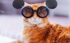 Картинка кошка, кот, взгляд, морда, фон, портрет, лапы, рыжий, очки, лежит, круглые, образ, забавный, имидж, заслонки