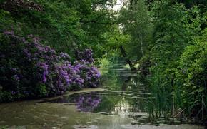 Картинка зелень, деревья, цветы, пруд, парк, камыши, Нидерланды, кусты, Noord-Holland, рододендроны