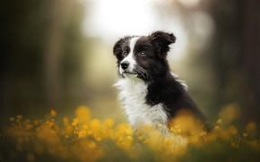 Картинка цветы, собака, щенок, боке