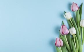 Картинка цветы, тюльпаны, розовые, white, белые, pink, flowers, beautiful, tulips, spring