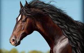 Картинка небо, лошадь, грива
