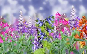 Обои niebo, kwiaty, kolorowe
