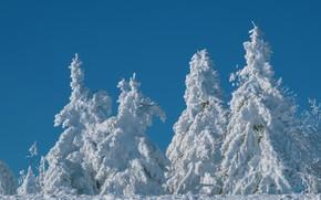 Картинка зима, лес, снег, синева, ели