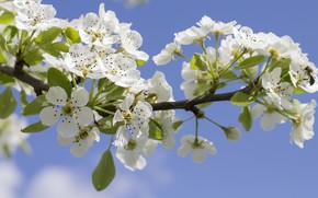 Картинка небо, цветы, ветка, весна