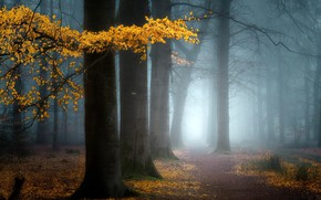 Картинка осень, туман, парк