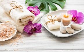 Картинка листья, цветы, орхидея, pink, flowers, bath, orchid, stones, candle, соль, spa, salt, zen