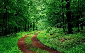 Картинка green, road, tree, forrest, ambience