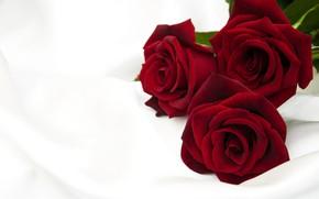 Картинка розы, красные, бутоны, Olena Rudo