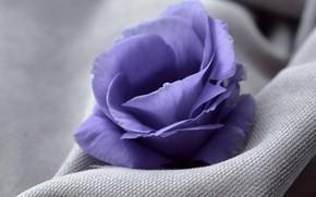 Картинка цветок, крупный план, ткань