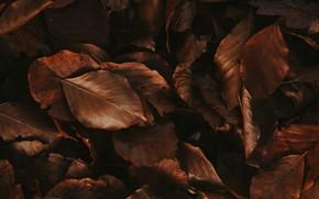 Картинка осень, листья, листва, сухие, коричневые